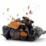 """""""Noli me tangere"""" - Les Pistils - Blue mysteries - 2020 - Œuvres de Florence Lemiegre - Ceramic sculptor"""